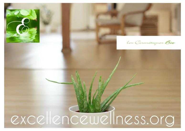 Excellence Wellness Spa Massage Bien-être et Beauté Bio Biarritz Anglet Bayonne, Massage Duo, Massage Relaxant, Rituel de Beauté Bio, Salon de Massage.